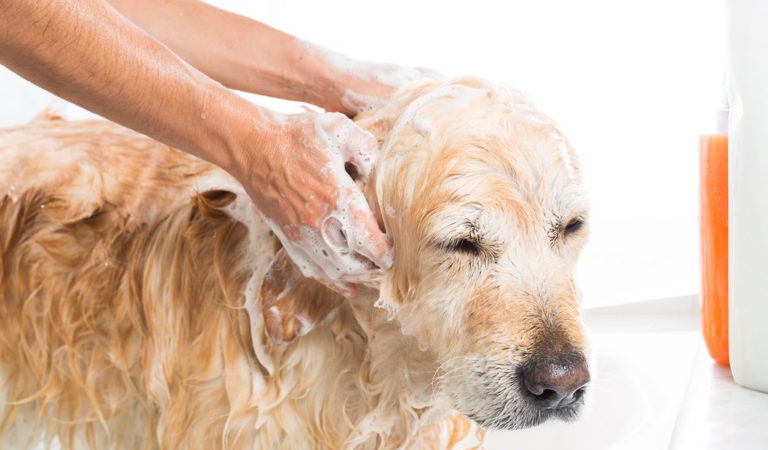 25+ Important tips every dog owner should know – But many surprisingly don't