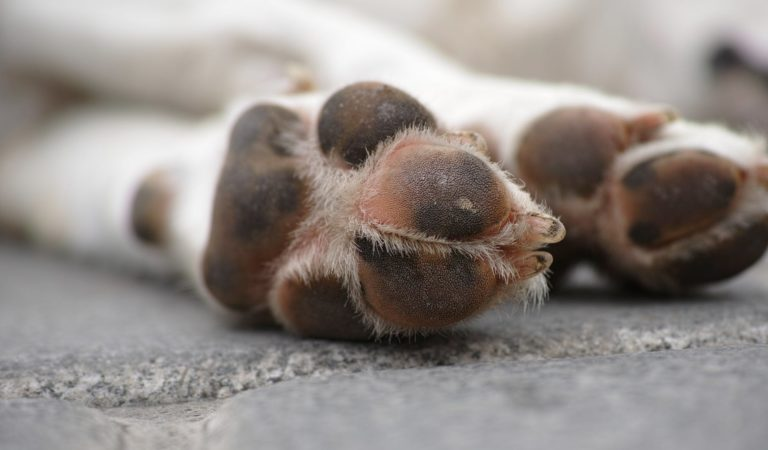 Treat Dog Chewing Paws