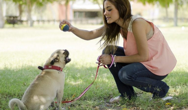Simple Dog Training Tricks Tips